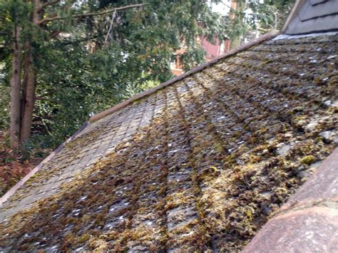 remove moss roof cleaning ordinary keeping moss off