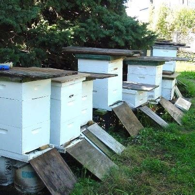 backyard hive backyard bee hives homesteading pinterest