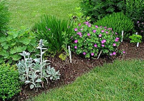 backyard herbs herb garden design plan herb garden design
