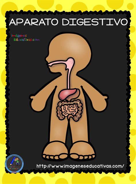 imagenes educativas cuerpo humano el cuerpo humano aparatos y sistemas para primaria 4