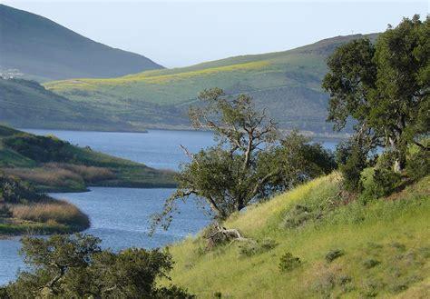 bald eagle habitat whale rock reservoir   coastal flickr