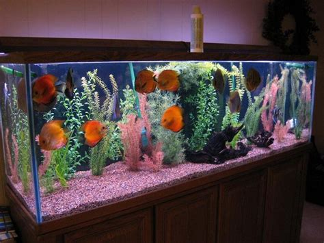 Who To Decorate A Home tips to get cool fish tanks