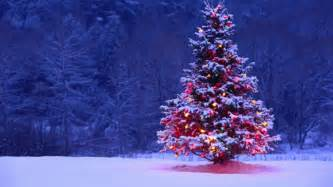 weihnachtsbaum kaufen die tradition des christbaums
