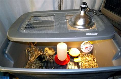 Heat Lamp For Ducklings by Friend Make Incubator This Is How To Make A Big Egg Incubator