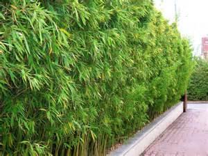 bambous conception et am 233 nagement de jardins jardins
