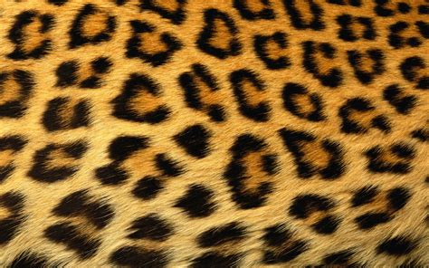 Cheetah Print by Erica Bunker Diy Style The Of Cultivating A Stylish
