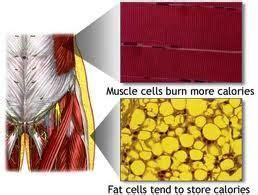 alimentazione per perdere massa grassa massa grassa ichnosmarketing