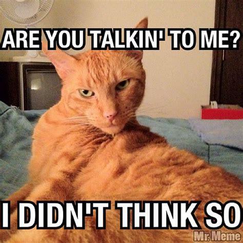 Sarcastic Cat Meme - meme cat instacat sarcasm boss bosscat cats memeca