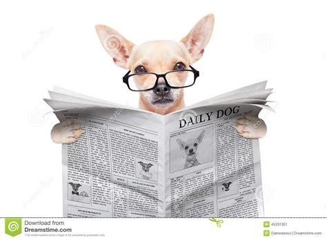 puppy news chihuahua newspaper stock photo image 45231351