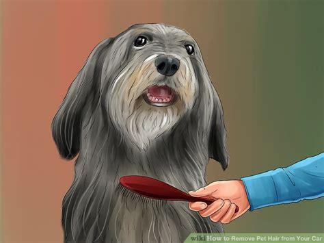 ways  remove pet hair   car wikihow