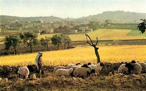 imagenes de los pastores en el nacimiento de jesus los pastores y el regalo de dios escuela dominical mtv