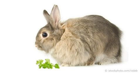 how often and how much to feed a puppy how much and what to feed rabbits