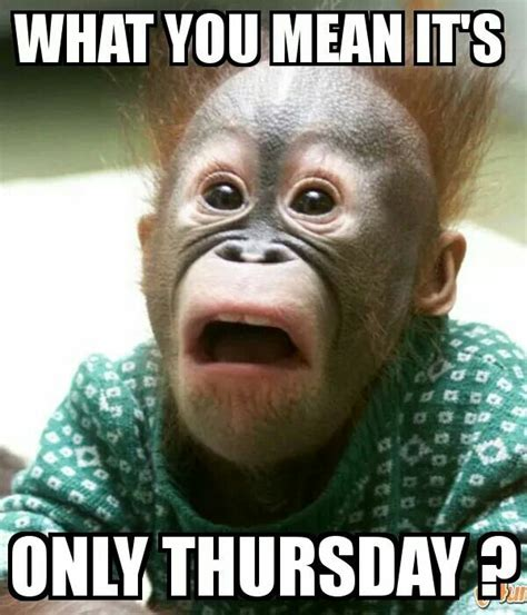 Thursday Funny Memes - what you mean it s only thursday thursday humor