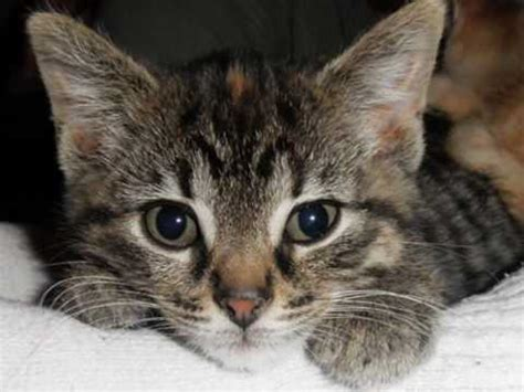 What Cats Do Not Shed by Four Feral Kittens Rescued From A Junk Pile In An