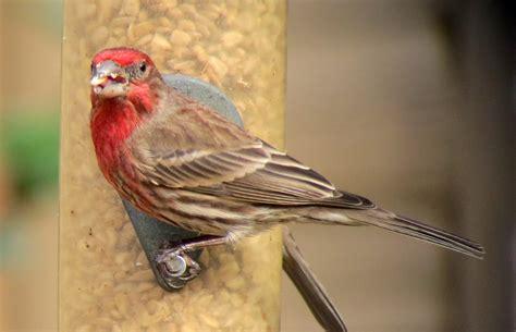 nc birds gallery