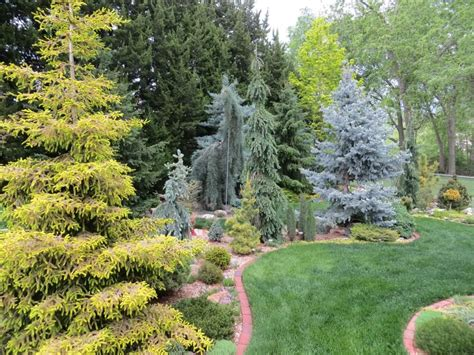 conifer garden arrangement small trees with big trees conifers pinterest small trees