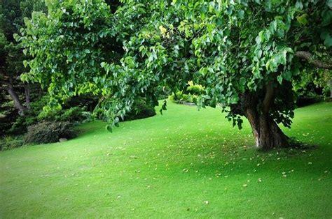 fare il giardino come fare giardino giardino fai da te