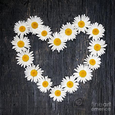 Duvet New York Daisy Heart By Elena Elisseeva Royalty Free And Rights