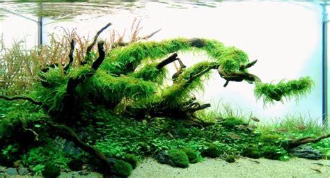 aquascape yang indah aquarium archives taman air aquascape