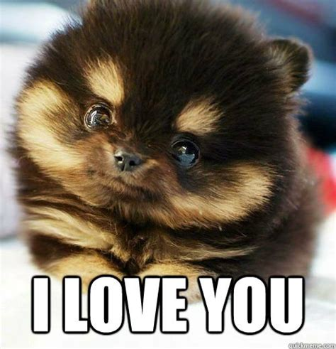 Love You Meme - stuff i like i love you puppy meme puppy