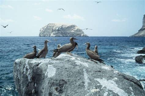 boatswain bird boatswain bird island