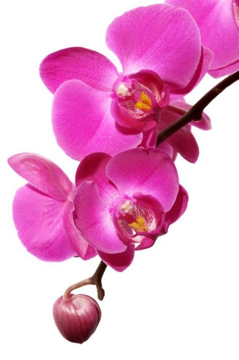 What is the Meaning of the Orchid Flower According to Colour