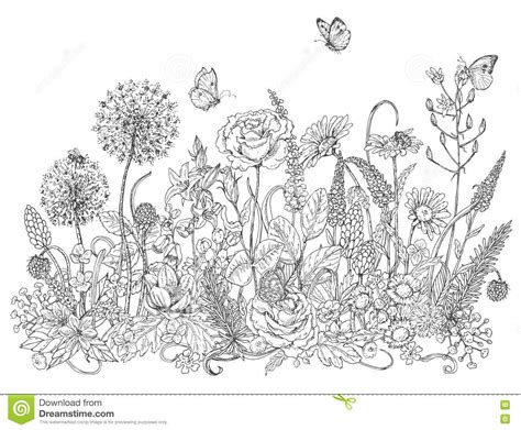 coloring pictures of wildflowers wildflowers and insects sketch stock vector illustration