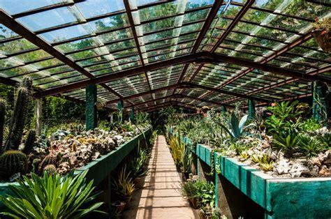 imagenes de jardines botánicos jard 237 n bot 225 nico de cupaynic 250 bayamo