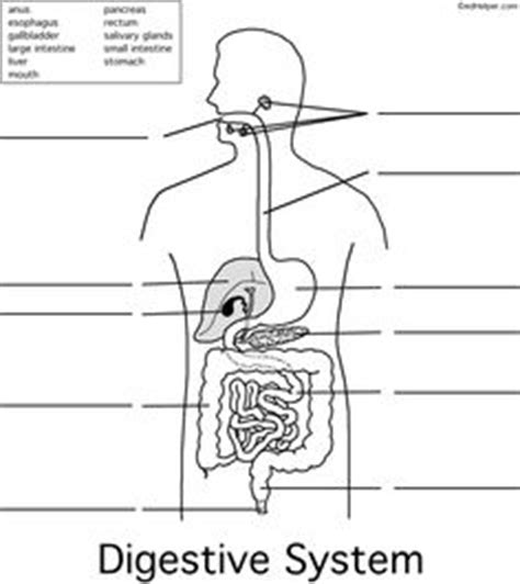 the system for part 4 doc lessons in betty neels happily after volume 4 books digestive system worksheet lessons all