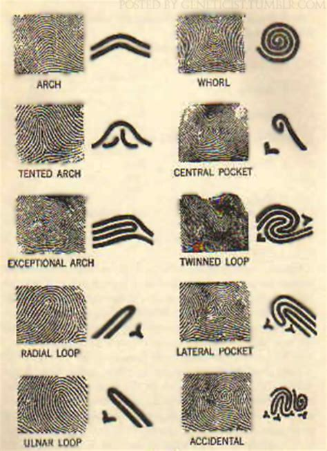 types of pattern fingerprinting forensic science and magnifiers