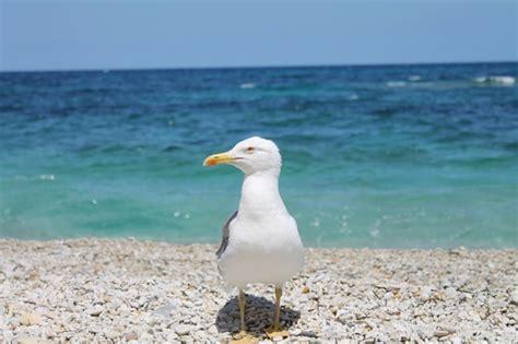 isola gabbiano gabbiano viaggi vacanze e turismo turisti per caso