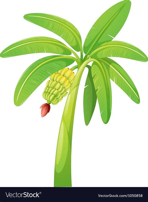 stock images royalty free images vectors banana tree royalty free vector image vectorstock