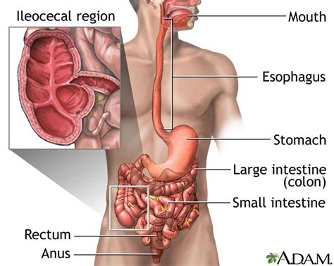 Abdominal Before Passing Stool by Inflammatory Bowel Disease Ibd Signs And Symptoms