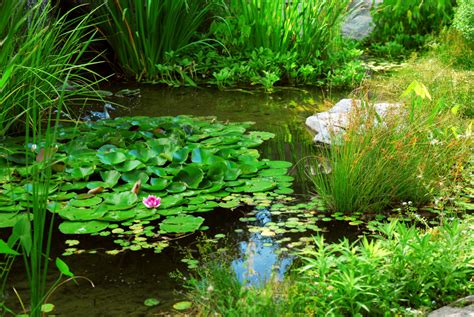 backyard pond plants choose the right plants for your water garden garden club