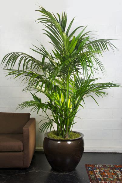 indoor plants uk 10 good reasons to surround yourself with house plants
