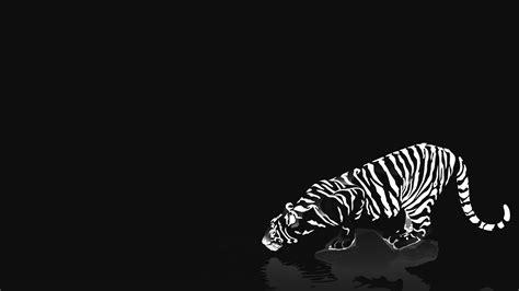 black and white tiger wallpaper black and white tiger wallpaper