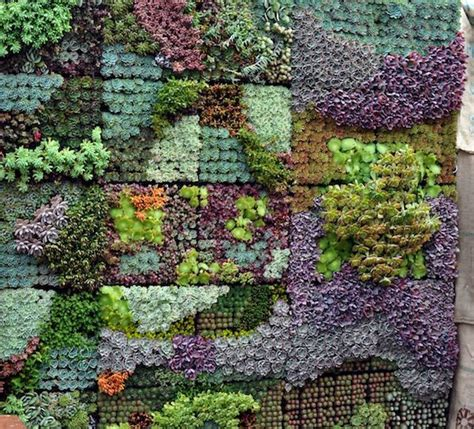 Best Succulents For Vertical Garden 25 Best Ideas About Succulent Wall Gardens On
