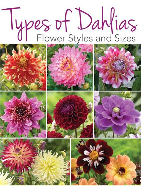 types of garden flowers 25 best ideas about dahlia flowers on unique