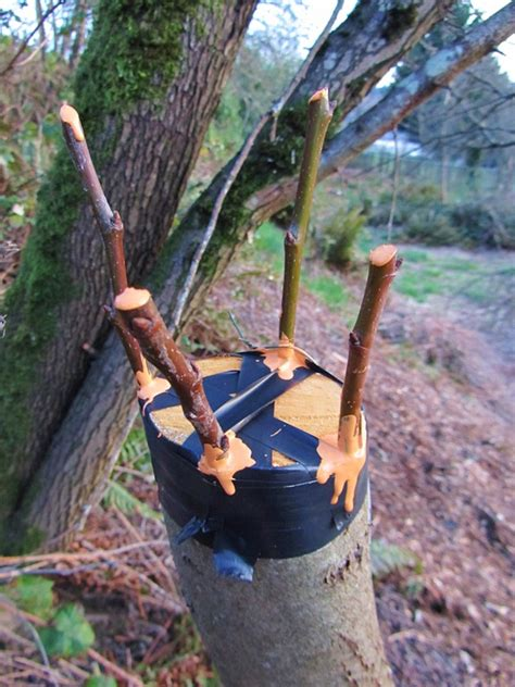 grafting fruit tree 301 moved permanently