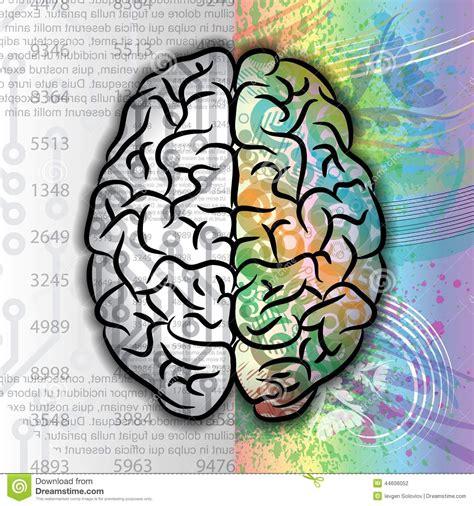 Color Pattern Brain | human brain color pattern stock vector image 44606052
