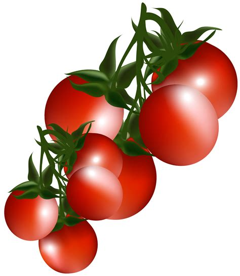 Clipart For Free Tomato Clipart 4715 Free Clipart Images Clipartwork