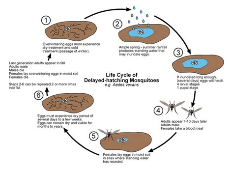 Fruit Flies In Drain Mosquitos Public Health And Medical Entomology Purdue