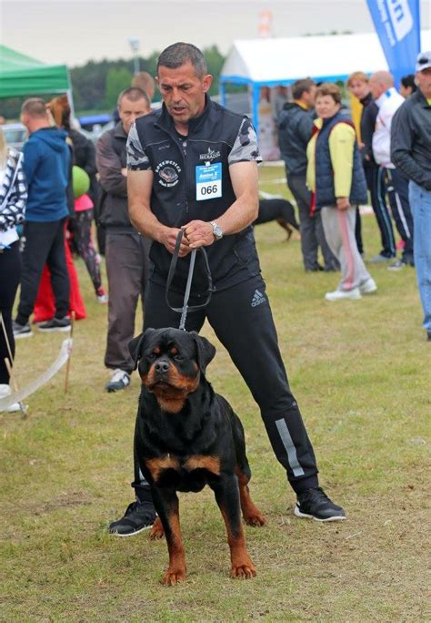 show me pictures of rottweilers rottweiler show nederland photo