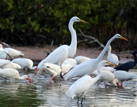 water birds and sunrise noni cay photography