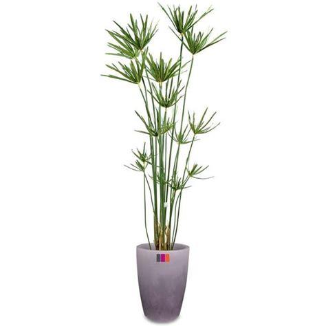 papyrus 180cm plante artificielle ext 233 rieur achat vente fleur artificielle cdiscount