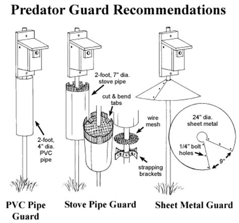 woodwork bluebird house plans predator guard  plans