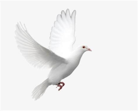 imagenes de palomas blancas gratis volando las palomas palomas blancas ala pluma imagen