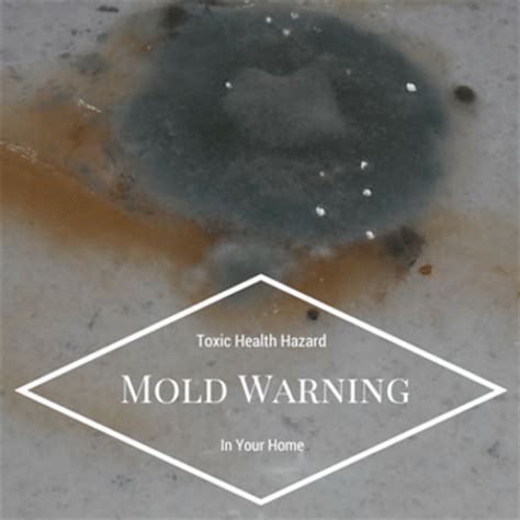 mold and the poison dr oz mold poisoning dangers identifying mold sources in the home