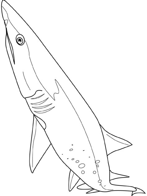 Shark Coloring Pages Coloring Kids Coloring Pages Of Sharks