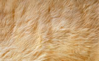 Faux Fur Pink Rug A Nice Collection Of Backgrounds Paterns Just Take A Look